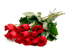 Roses Wrapped, Durham Florist, Durham Flowers, Markdale Flowers, Markdale Florist